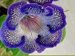 flower001_OKcr