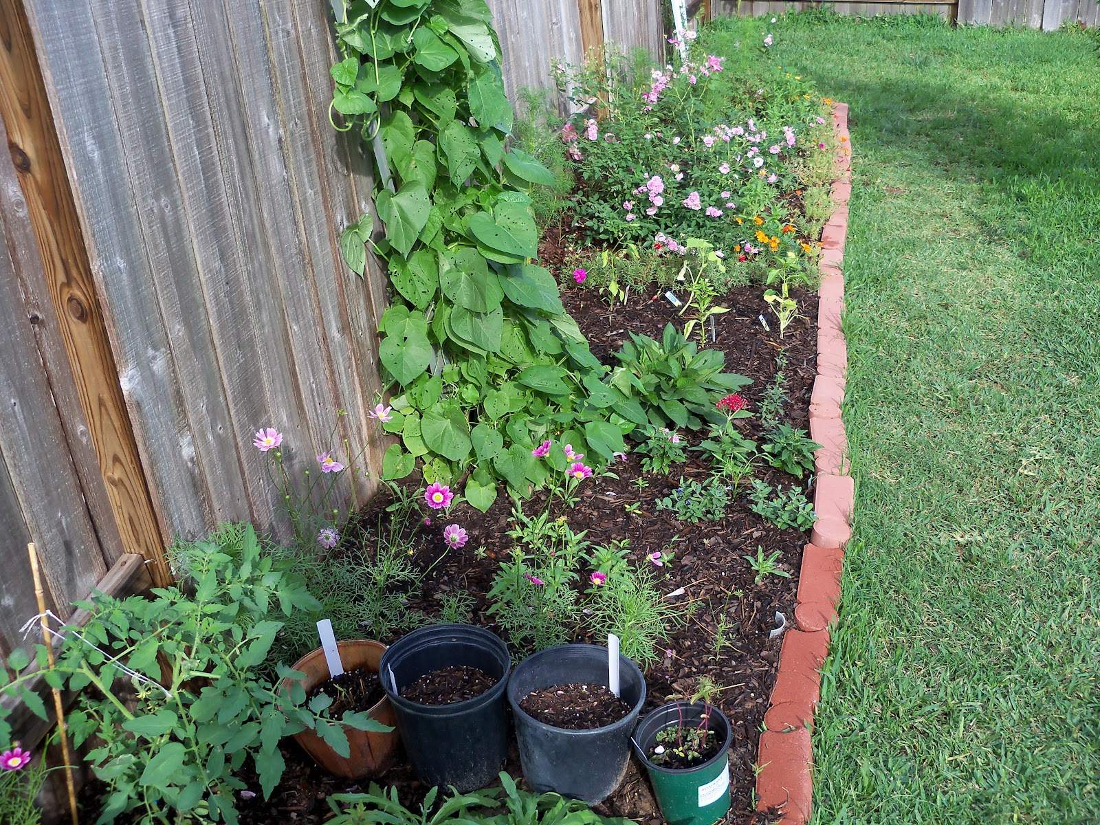 Gardening 2010, Part Two - 101_2271.JPG