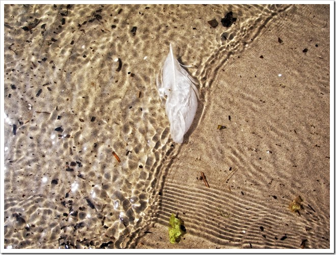 white feather in the beach water parnu estonia photo by sue wellington-web