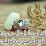 marwa ibrahim's profile photo