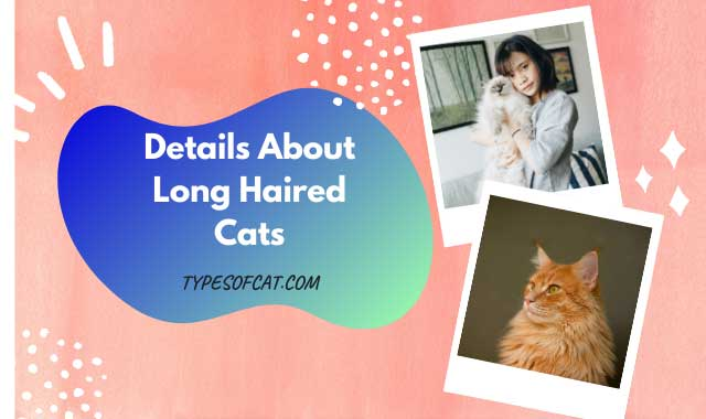 Details About Long Haired Cats