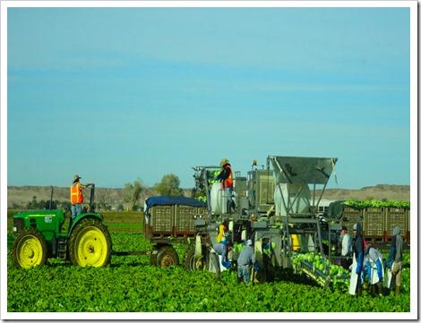 Farming in AZ