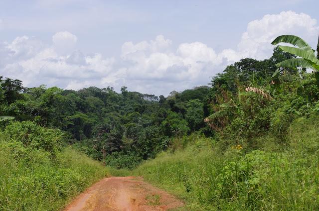 La piste vers Ebogo (Cameroun), 9 avril 2012. Photo : J.-M. Gayman
