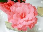 桃色 バラ〜千重咲き 大輪