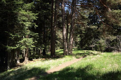 Slnečný les