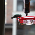2013_03_15_Hummingbird