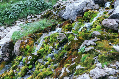 Kaskaden nahe der Mittlere Niggenalpe Nickental Tosenbach Hinterstein Allgäu