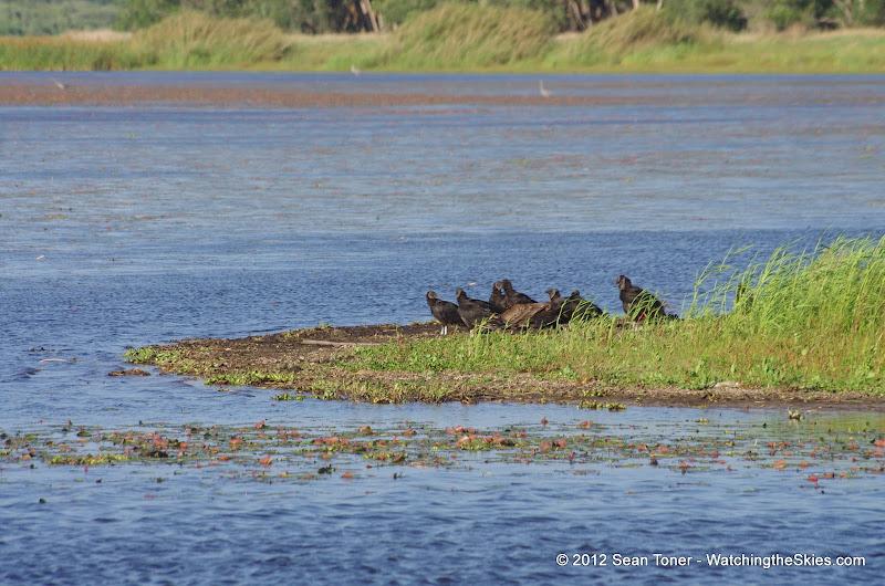 04-06-12 Myaka River State Park - IMGP9907.JPG