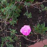 Gardening 2013 - 115_5513.JPG