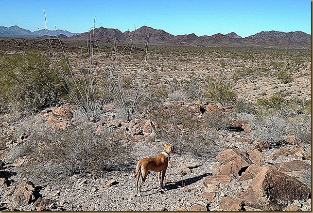 Yuma looking across the desert