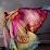 Divine Love Alchemy Lightworkers's profile photo