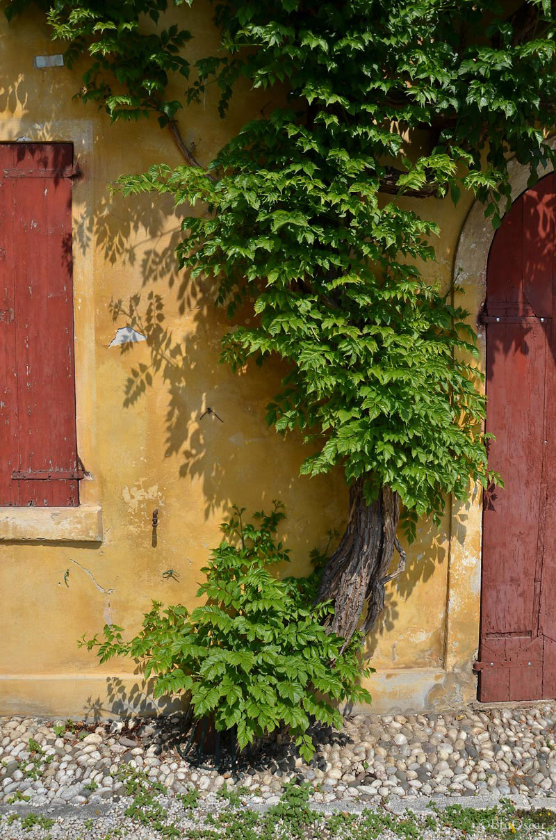 Villa Maser mostra ciliegie 39