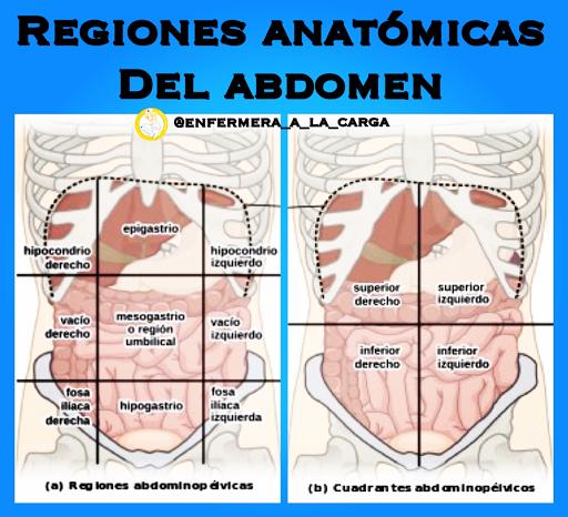 Enfermera a la Carga: Regiones anatómicas del abdomen
