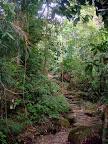 Zagubiona ścieżka w dżungli.