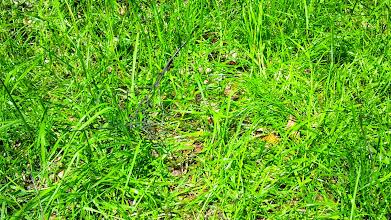 Photo: Am Wegesrand: ein gelber Falter mit dunkelbraunen Flecken.