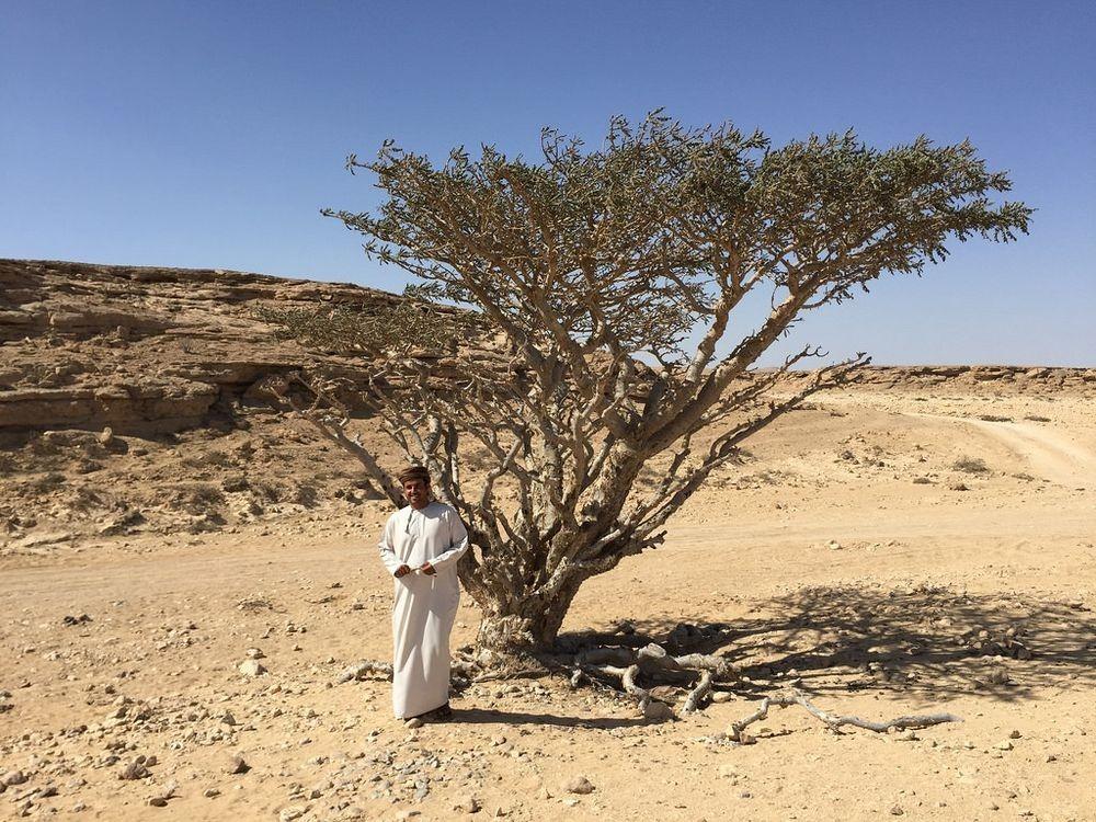 frankincense-wadi-dawkah-8