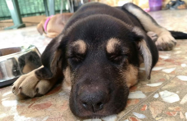 5 Things You Learn When You Get a Puppy