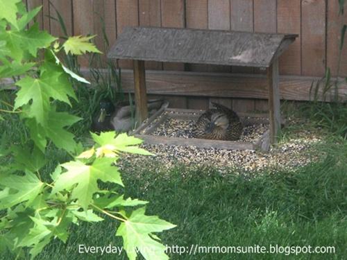 photo of ducks sleeping in bird feeder