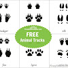 FREE Animal Tracks Learning Material