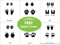 Animal Tracks Learning Material