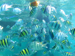 pulau harapan, 5-6 september 2015 skc 018