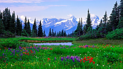 Alpine Wildflowers, Rocky Mountains, British Columbia.jpg