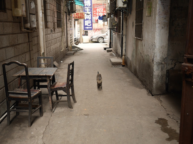 cat walking down an alley in Changsha, Hunan, China