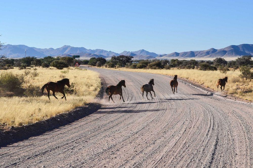 namib-desert-horse-7