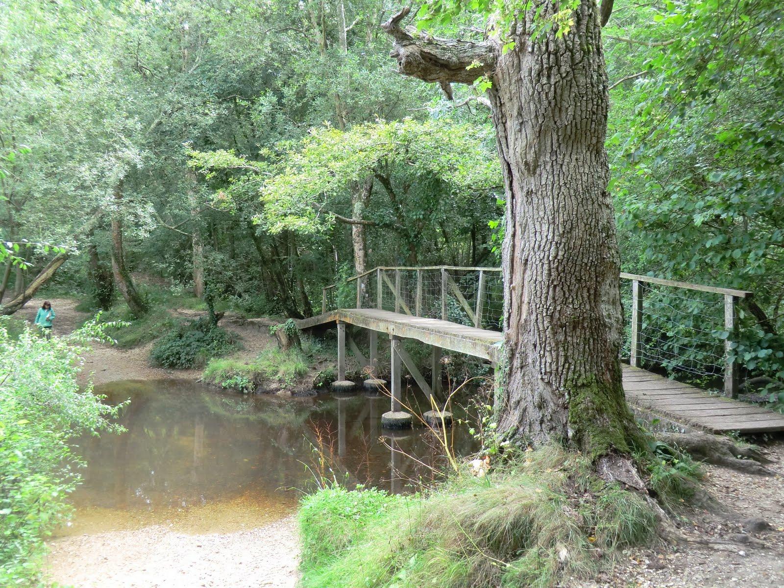 CIMG4286 The Lymington River in Roydon Woods