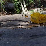 Rassemblement de papillons sur la rive rocheuse de la Nyong. Ebogo (Cameroun), 8 avril 2012. Photo : J.-M. Gayman