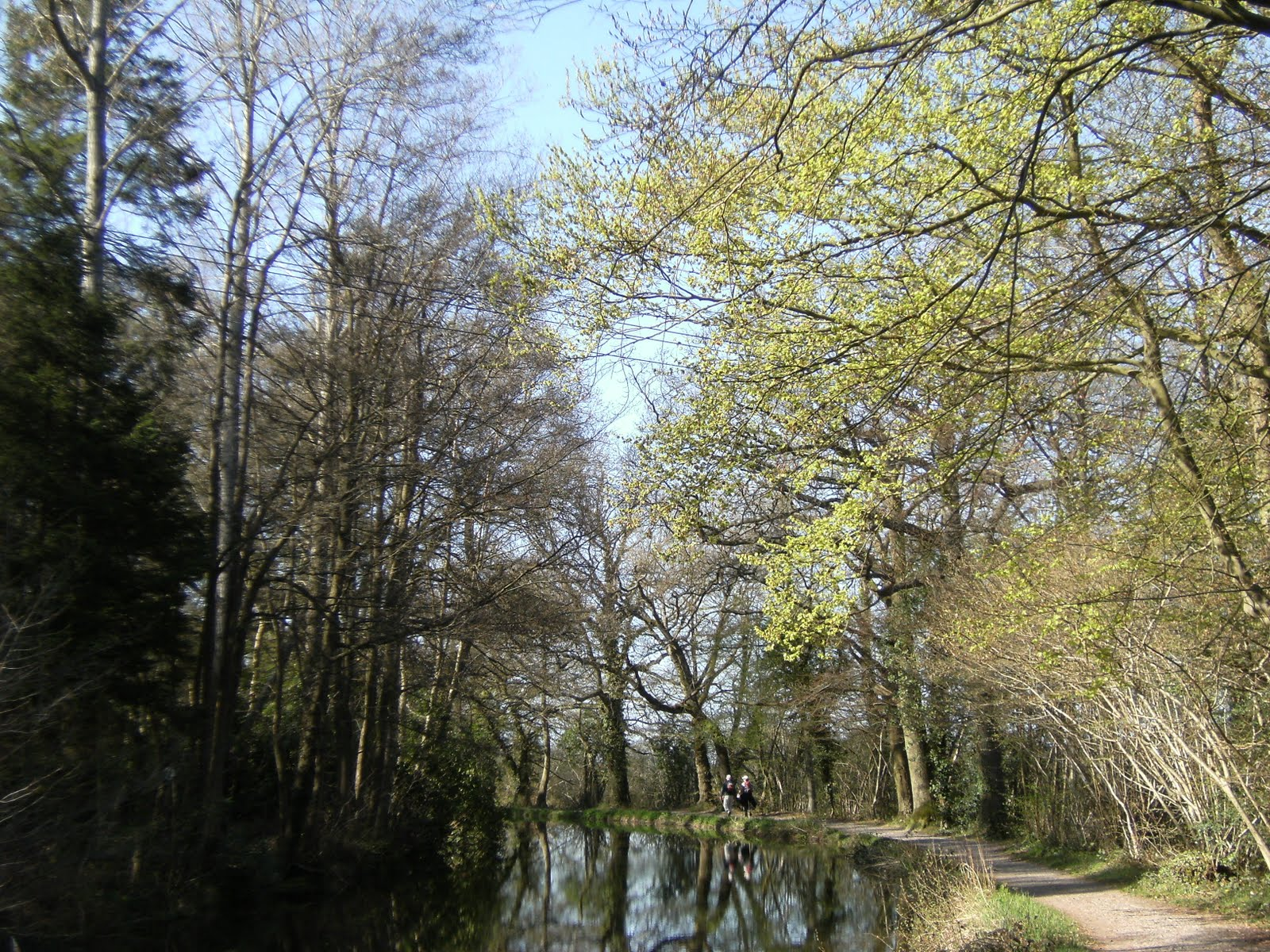 1004170024 Early spring on the Basingstoke Canal