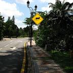 Monkeys crossing (Kuala Lumpur)
