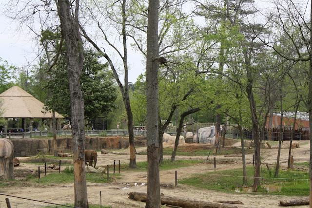 Zoo Snooze 2015 - IMG_7267.JPG