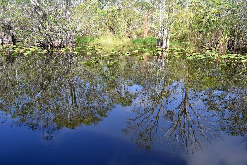 Эверглейдс Холидей Парк, Флорида (Everglades Holiday Park, FL)