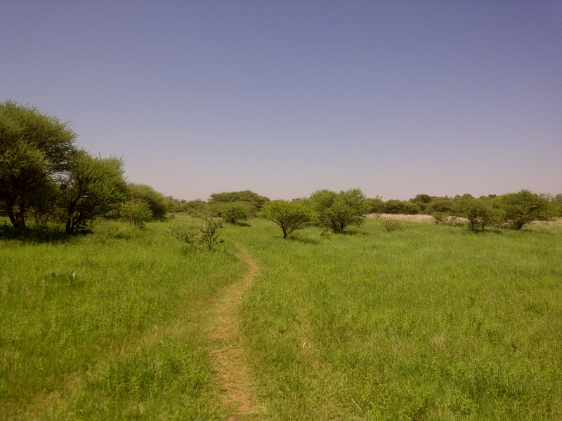Walking near the flooding Notwane river in Mochudi Since the rains have come everything is green