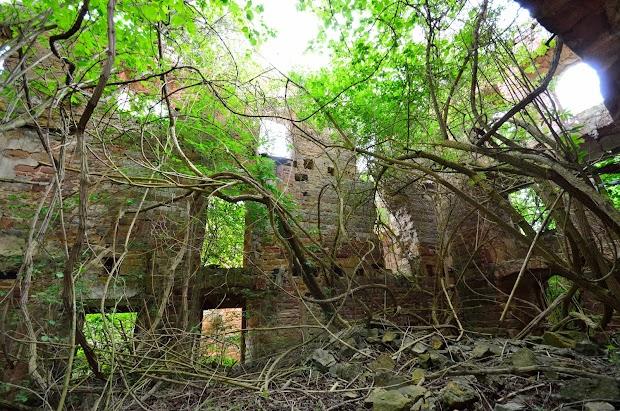 20160514_Schlossruine-Waesserndorf-26.jpg