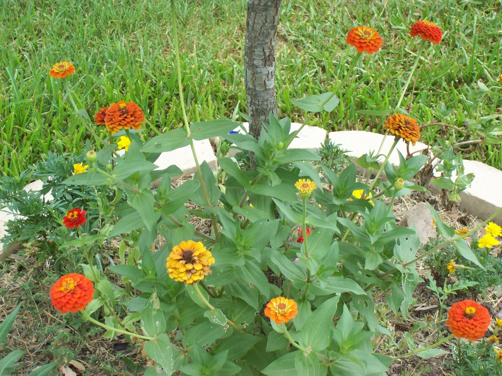 Gardening 2009 - 101_4967.JPG