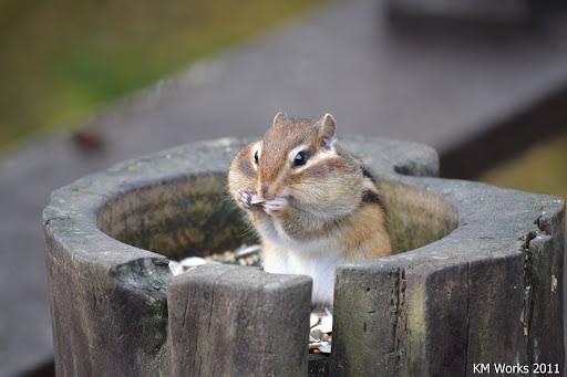 Squirrel | 2011-10 | Photo