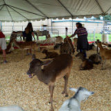 Fort Bend County Fair 2014 - 116_4270.JPG