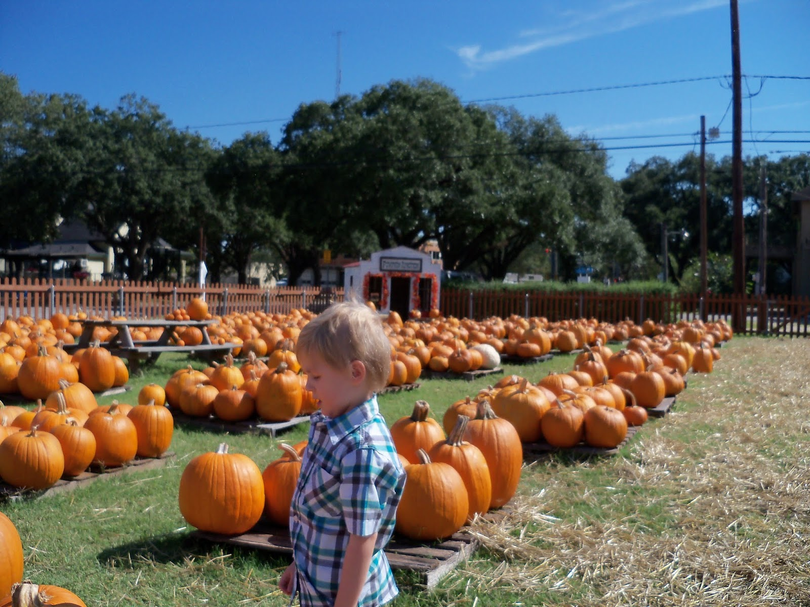 Pumpkin Patch 2015 - 100_0395.JPG