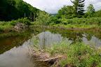 June 17: Beaver pond