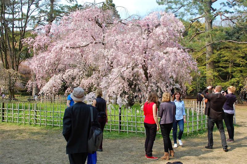 2014 Japan - Dag 10 - jordi-DSC_0859.JPG