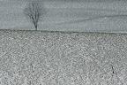FRISQUETTE SOLITUDE  Prairie en Novembre dans la Vallée de Joux (Le Pont, CH)