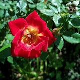 Gardening 2013 - 115_6234.JPG
