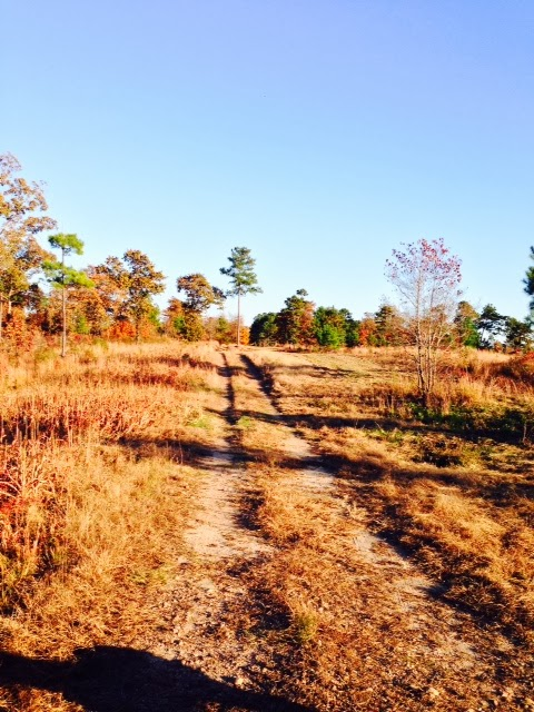 Anderson Creek Hunting Habitat - DeerHabitat005.JPG