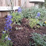 Gardening 2014 - 0404190657.jpg