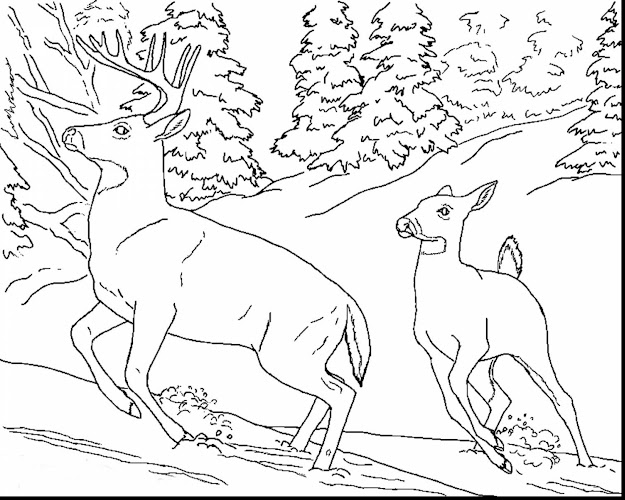 Amazing Realistic Animal Coloring Pages With Free Coloring Pages Animals  And Free Coloring Pages Animals Realistic