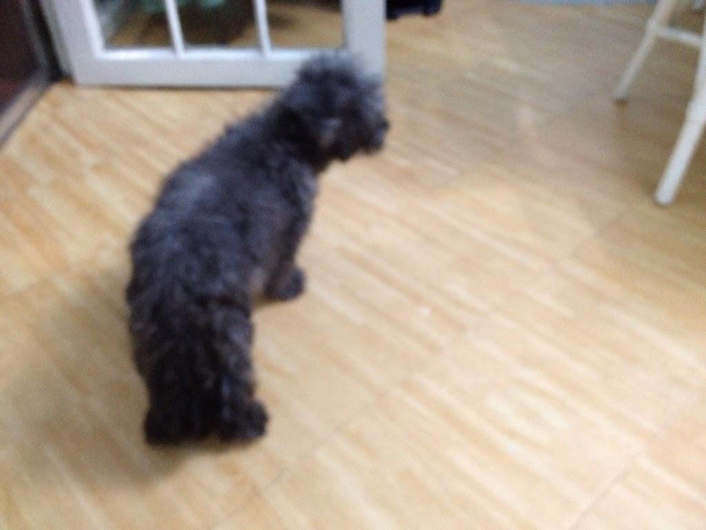 Dog Not Want To Eat Go Outside Often