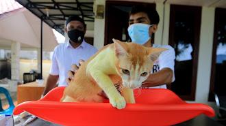 Anjing dan Kucing Tidak Terbukti Menularkan Virus Covid-19