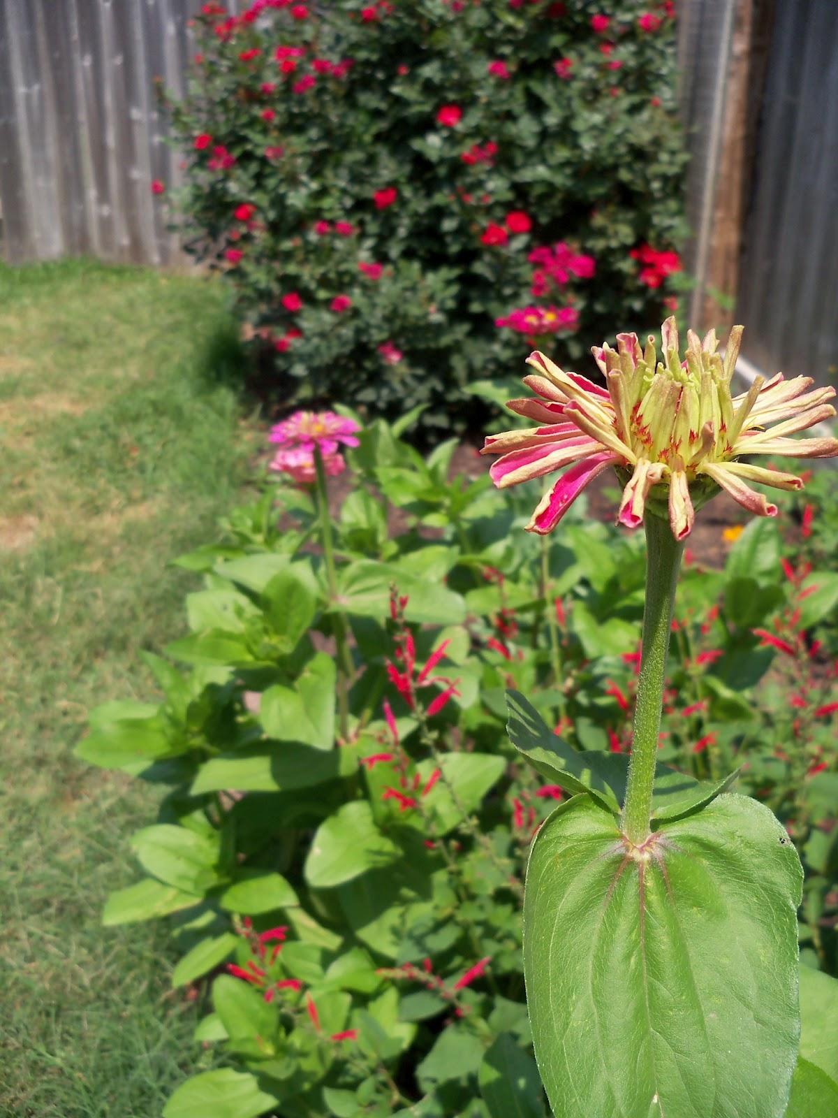 Gardening 2011 - 100_8001.JPG